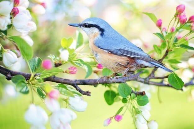 В первый день весны делюсь с Вами полезной информацией из китайского календаря.